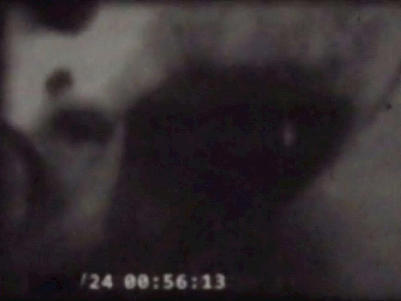 Grey alien found in an unknown UFO crash site