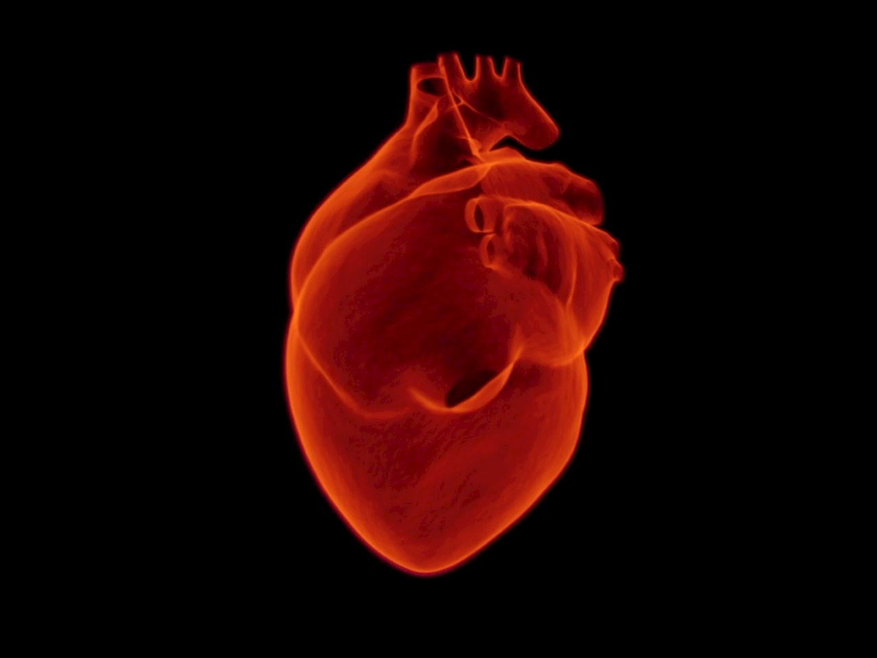 Artistic illustration of a heart
