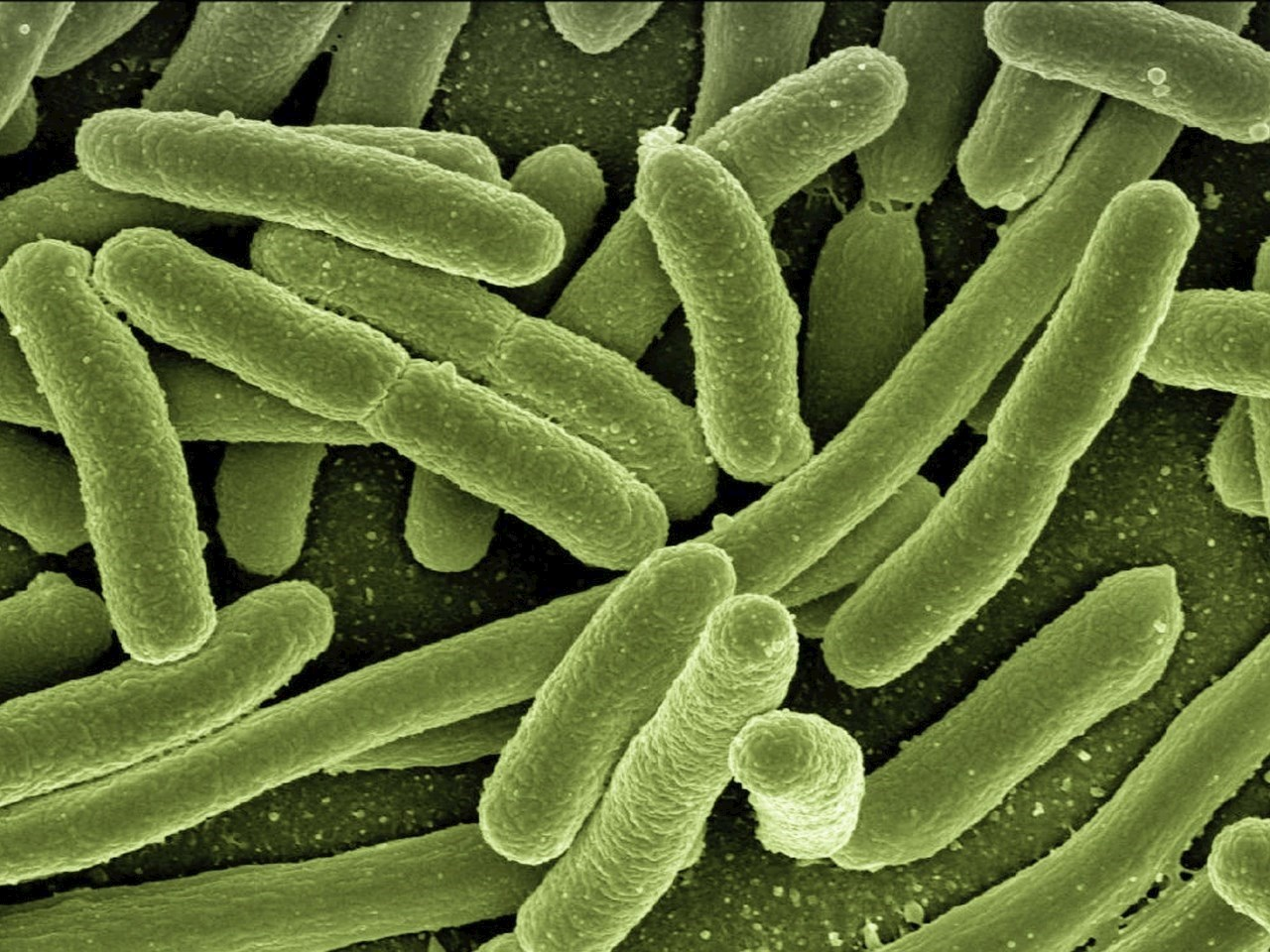 Bacteria from outer space
